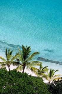 Palm Trees Against Cristal Blue Water von Sami Sarkis Photography