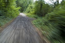 Dirt path and surrounding bush seen from a cyclist's point of view. von Sami Sarkis Photography
