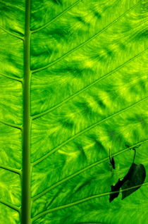 Bright green leave with an insect crawling over its surface von Sami Sarkis Photography