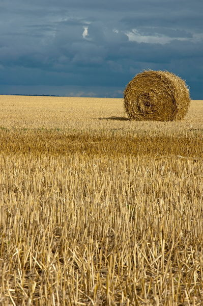Rm-bale-farm-field-france-harvested-hay-bale-fra720