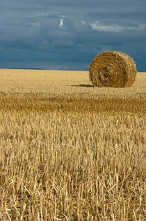 Hay bales in harvested corn field by Sami Sarkis Photography