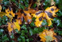Rf-autumn-dying-grass-leaves-var381