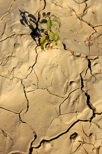 Green plant growing in cracked dry soil. by Sami Sarkis Photography