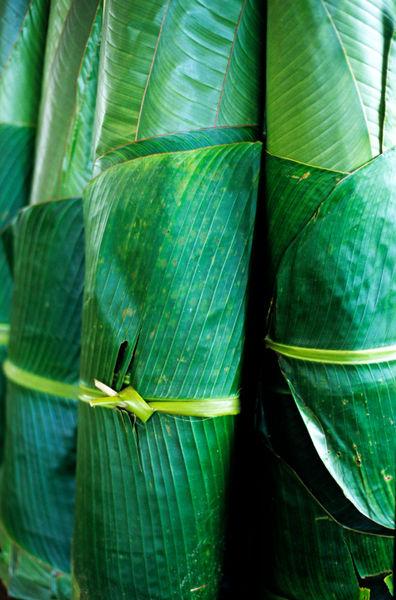 Rf-banana-freshness-leaves-vanuatu-vt278
