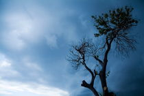 Branches of a tree silhouetted against a stormy sky by Sami Sarkis Photography