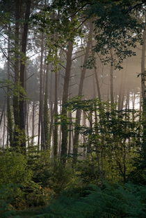 Morning fog surrounds the trees in  Landes Forest by Sami Sarkis Photography