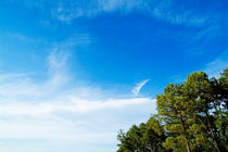 Pine trees against a cloudy sky. by Sami Sarkis Photography