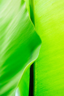 Close up of green leaf by Sami Sarkis Photography