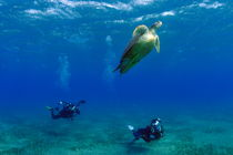 Divers photographing Green turtle by Sami Sarkis Photography