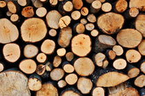Stack of tree logs by Sami Sarkis Photography