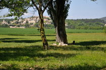 Tree in  a field with Vallauris village by Sami Sarkis Photography