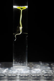 Seedling in test tube with water von Sami Sarkis Photography