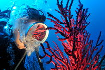 Diver's mask reflecting red gorgonian by Sami Sarkis Photography