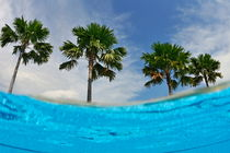 Palm trees by swimming pool egde by Sami Sarkis Photography