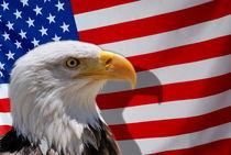 Bald eagle (Haliaeetus leucocephalus) and US flag von Sami Sarkis Photography