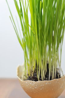 Grass in ostrich eggshell by Sami Sarkis Photography