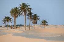 Camel ride in Sahara desert von Sami Sarkis Photography