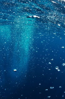 Diver's bubbles rising-up to surface by Sami Sarkis Photography