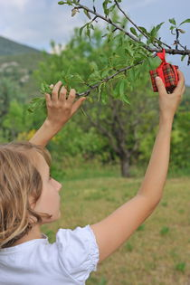 Girl picking wrapped gift box from tree von Sami Sarkis Photography