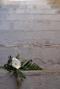 Daisy flower on concrete steps by Sami Sarkis Photography