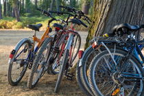 Parked mountain bikes leaning on tree by Sami Sarkis Photography