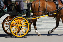 People in horsedrawn carriage on street by Sami Sarkis Photography