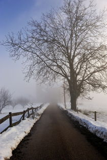 Bare tree and snowy countryroad von Sami Sarkis Photography