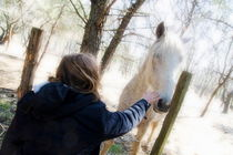 Girl stroking camargue horse at fence von Sami Sarkis Photography