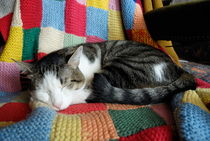 Cat sleeping on multicoloured wool blanket by Sami Sarkis Photography
