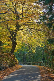 Road among colorful trees during autumn von Sami Sarkis Photography