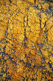 Yellow crust (close-up) on ash plain by Sami Sarkis Photography