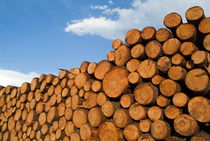 Stack of wooden logs in the Landes forest by Sami Sarkis Photography