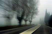 Blurry bare trees visible through the fog seen from a speeding car von Sami Sarkis Photography