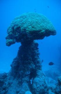Rf-coral-noumea-lagoon-reef-unusual-nc155