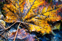 Autumn leaves on the ground. von Sami Sarkis Photography