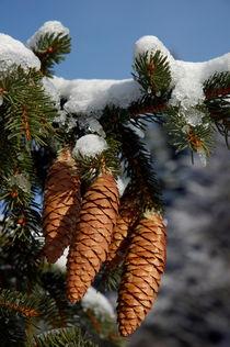 Rf-branch-nature-pinecones-snow-ppl854