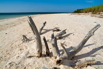 Driftwood sticking out of a white sand beach by Sami Sarkis Photography