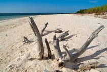 Rf-beach-coast-drift-wood-sea-cub0542