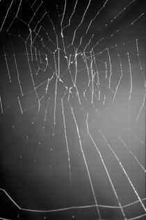 Delicate structure of a spider web. von Sami Sarkis Photography
