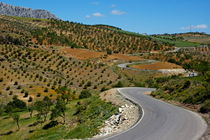 Road winding between fields of olive trees von Sami Sarkis Photography