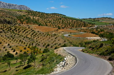Rm-andalusia-crop-olive-orchard-road-rural-winding-adl1058