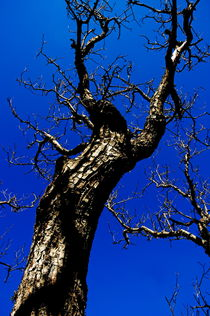 Bare tree trunk against a blue sky in springtime by Sami Sarkis Photography