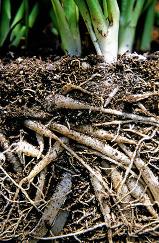 Rf-france-growth-plants-roots-soil-tangles-lds172