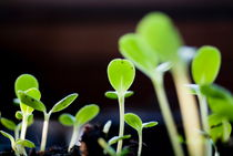 Seeding shoots coming up from the ground. by Sami Sarkis Photography