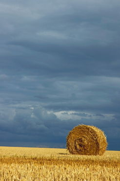 Rm-bale-farm-field-france-harvested-hay-bale-fra726