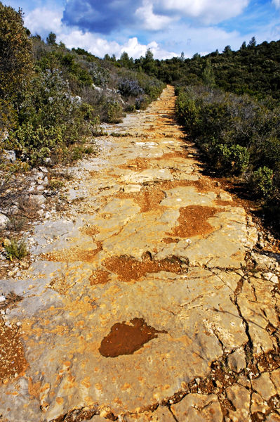 Rf-forest-path-plants-rocks-shrubs-trail-trees-pro454