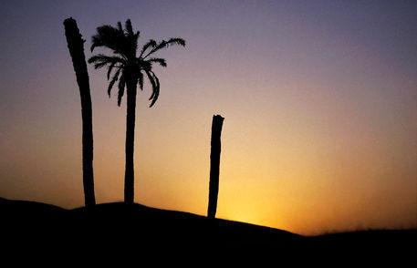 Rm-palm-sahara-desert-silhouette-sunset-tunisia-lds220