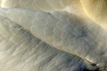Plumage on a Northern Gannet (Morus bassanus) wing von Sami Sarkis Photography