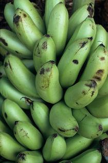 Rf-abundance-bananas-freshness-vt311