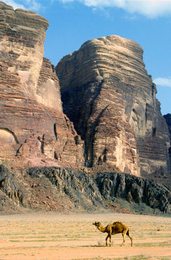 Rf-camel-desert-jordan-rock-formations-cor103